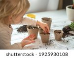 Small photo of Hands of a small child planted seeds at home. Seeds of courgette or pumpkin in open palm of child. Earth day concept. nurturing baby plant. protect nature. Peat pots for planting