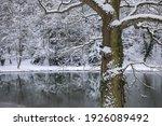 Winter Landscape  Winter Forest ...