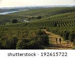 alfenas  minas gerais  brazil   ... | Shutterstock . vector #192615722