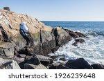 The Beautiful Ocean Coast Water ...