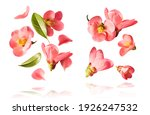 Set With  Beautiful Spring Pink ...