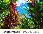 Tropical Plants Of Various...
