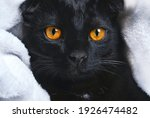 Black Cat With Yellow Eyes On A ...