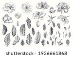 magnolia grandiflora. vector... | Shutterstock .eps vector #1926661868