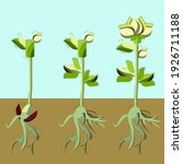 illustration of plant growth... | Shutterstock . vector #1926711188