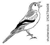 the chaffinch  fringilla... | Shutterstock .eps vector #1926756608