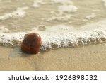 Sea Snail Skin Is Stranded On...