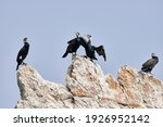 A Small Group Of Cormorants...