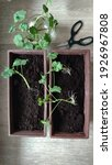 Plant Propagation By Cuttings....