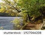 Footpath And Trees Around Lake...