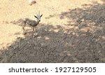 Animal In Wildlife Close Up...