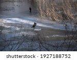Cormorant In The Ice Park  Pair ...