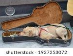 Dog Sleeping In A Guitar Case