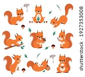 Cute Red Squirrel Holding Acorn ...