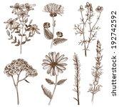 aromatherapy,art,bitter,botany,calendula,chamomile,drawing,drawn,drug,elecampane,extract,floral,flower,garden,ginger