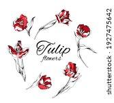 red tulip flowers. stems. set...   Shutterstock .eps vector #1927475642