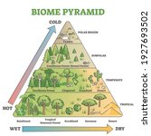 biome pyramid as ecological... | Shutterstock .eps vector #1927693502