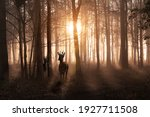 Small photo of Young deer in a sunrise and misty winter forest. Natural woodland dawn landscape in Norfolk England. Dark shadows and golden morning sun