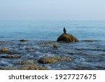 Cormorant On The Blue Sea