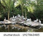 Pelican Family In Captivity In...