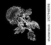 hand drawn closeup silhouette... | Shutterstock .eps vector #1927948598