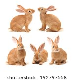 Stock photo baby of orange rabbit on white background 192797558