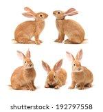Stock photo baby of orange rabbit on white background 192797558
