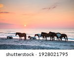 Feral Horses On The Beach Of...