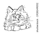 Cute Cat. Sketch  Vector...