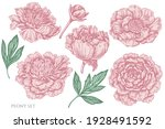 vector set of hand drawn pastel ...   Shutterstock .eps vector #1928491592