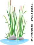 reed mace plant grow near the... | Shutterstock .eps vector #1928515568
