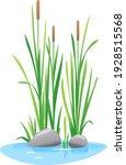 Reed Mace Plant Grow Near The...