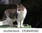 An Israelien Cat In Israel Tel...