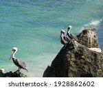 A Closeup Shot Of Pelican Birds ...