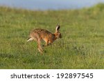 Stock photo hare running 192897545