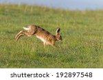 Stock photo hare running 192897548