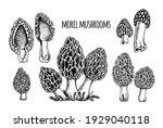 morel mushrooms vector... | Shutterstock .eps vector #1929040118