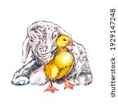 duckling and goat watercolor... | Shutterstock . vector #1929147248