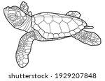 Small Turtle. Baby Sea Turtle....