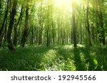 beautiful green forest | Shutterstock . vector #192945566