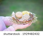 Hands Hold A Beautiful Nest Of...