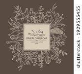 background with baikal skullcap ... | Shutterstock .eps vector #1929555455