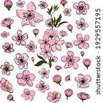 free hand sakura flower vector... | Shutterstock .eps vector #1929557195