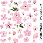 free hand sakura flower vector... | Shutterstock .eps vector #1929566675