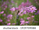 Butterfly Fly Around Purple...