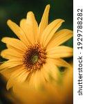 Macro Shot Of A Sunflower...