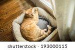 Stock photo cat in cat bed 193000115