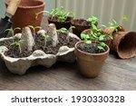 Vegetable Seedlings In Reused...
