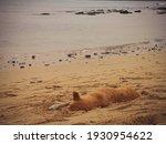 Sandy Beach Of Sal Rei  Cape...