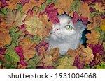 Cute Longhair Cat Looking Funny ...